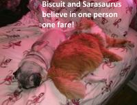 One person one fare