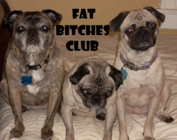 Fat Bitches Club